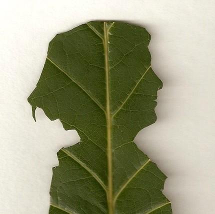 leaf-silhouette-design