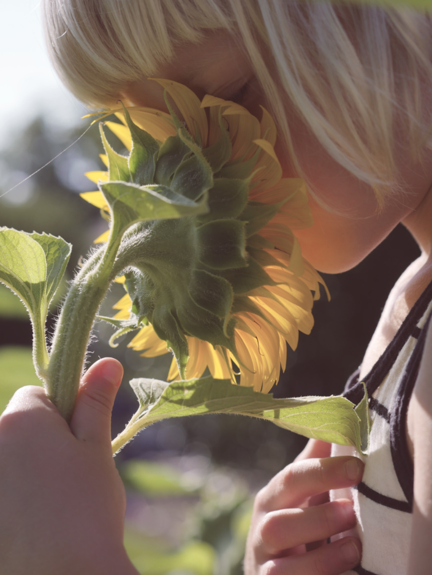 kid smelling sunflower